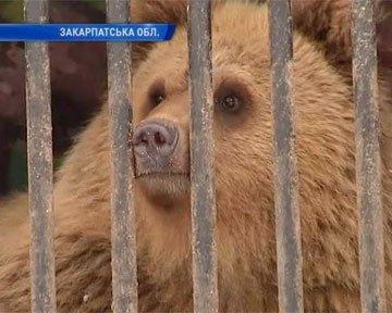 Причиною стало неналежне утримання понад двох десятків тварин