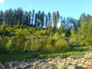 Карпати – один із найцінніших лісових масивів України