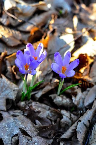 Фото первоцветов сделаны в красивейших местах на окраине Виноградов