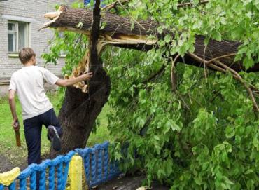 Ураганный ветер пронесся над Закарпатской областью
