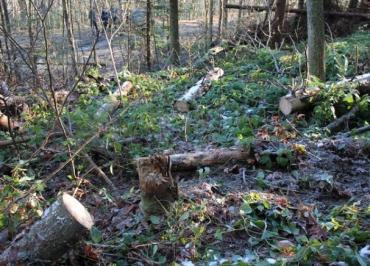 Щороку на лісосіках Закарпаття залишають гнити 250,0 тис. куб.м відходів