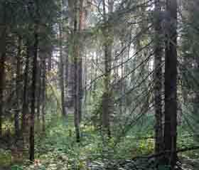 Зафиксирована незаконная вырубка деревьев на лесосеках общим объемом 127 куб. м