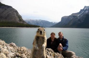 В Канаде белка заинтересовалась фотосессией