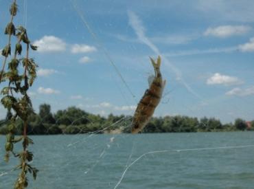 С 5 апреля по 25 мая в Закарпатье запрещается ловить любую рыбу