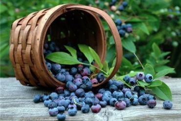 Бизнес на сборе ягод и грибов подойдет для любого закарпатца