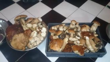 В дебрях Тячевского района активизировался рост белых грибов