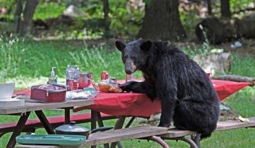 Голодный медведь пришел к закарпатцу немного поесть лакомств