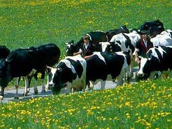 На Закарпатті діє Програма розвитку та підтримки тваринництва.