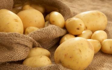 Картоплю ми вживаємо частіше всього. А що ви знаєте про картопю?