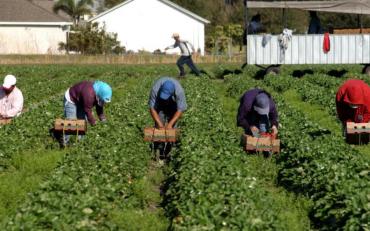 Масова міграція: чи є перспективи у талановитої молоді