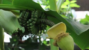 Ужгород. Живий тризуб, ужгородські банани та рідкісна флора...