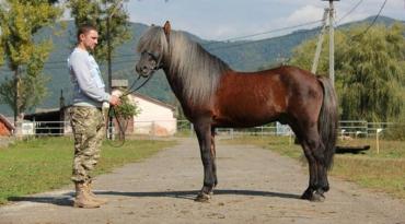 Гуцульський кінь – аборигенна гірська порода свійських коней