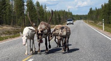 На Закарпатті з'являться дороги для тварин?