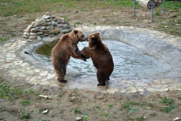 Карпатський регіон. Місце щасливих ведмедів.