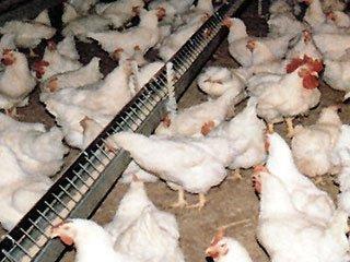 ЕС начал проверку украинских производителей мяса