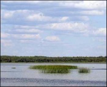 Из России в Эстонию переплыл остров