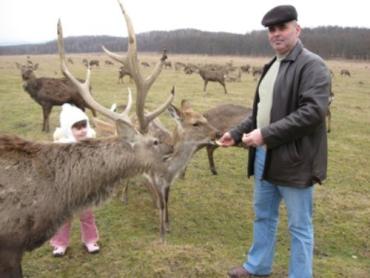 Северные олени в Карпатах