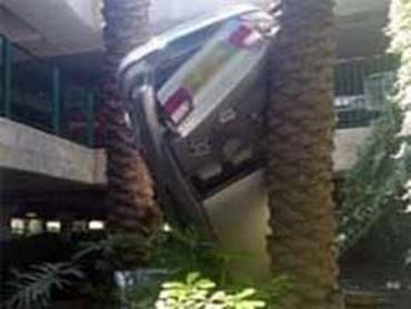 Авто воткнулось носом в землю, застряв между пальмами