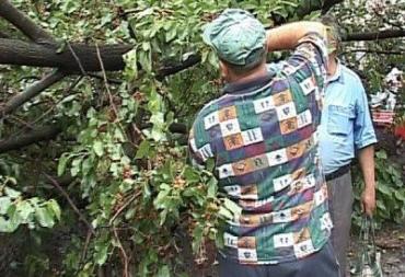 На Закарпатье опять падали деревья
