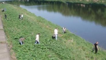 Экологическая акция «Чистый Город» в Ужгороде