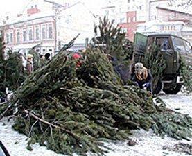 Ивано-Франковская милиция отслеживает факты незаконных рубок хвойных деревьев.