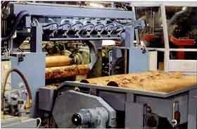 На Закарпатье 600 предприятий обрабатывают древесину и выпускают изделия из нее
