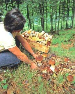 На Закарпатье отравились грибами 12 человек