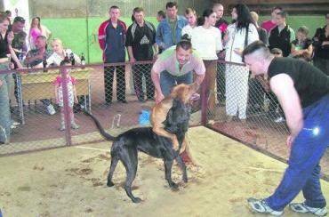 Собачьи бои под запретом с марта 2006 года