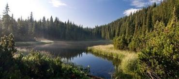 Озеро называют Маричейка, а лес вокруг него — Девичьим