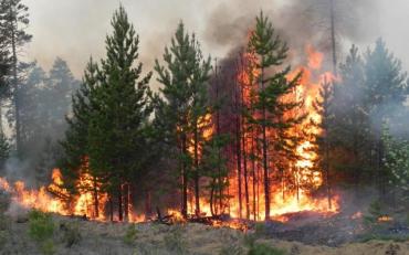 Південь України накрила хвиля моторошних пожеж