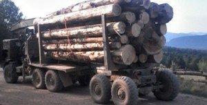 Нелегально пытались перевезти 65 куб. м. древесины и 4 куб. м. речного камня