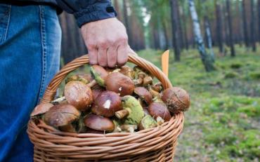 Спиоск грибів, які схожі на їстівні