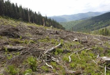 Сюжет из Закарпатья по рубке леса подготовлен тенденциозно, несбалансированно