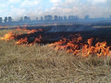 Причину возникновения возгорания сейчас устанавливают правоохранительные органы