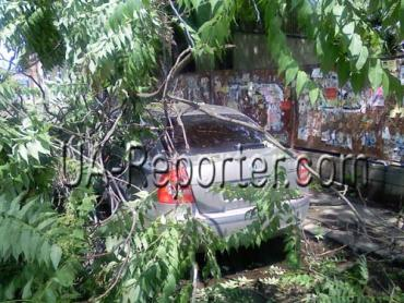 В Ужгороде дерево придавило Шкоду
