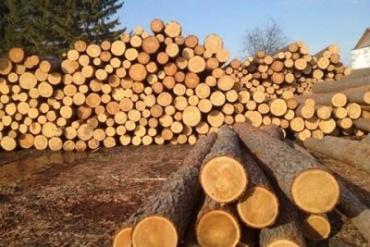 Правительство вынашивает планы по отмене моратория на экспорт леса