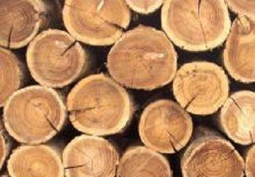 Таможенники в Закарпатье изъяли экспортируемые лесоматериалы на 140 тыс. грн
