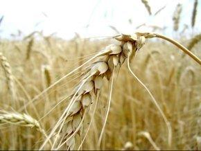 В этом году Закарпатье полностью обеспечит себя зерном