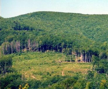 В Закарпатье угроза схождения селевых потоков