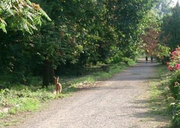 В ужгородском Боздошском парке живут олени