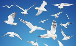 У вихідні у Мукачеві — обласна виставка голубів