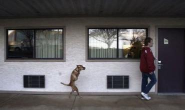 Собака-мутант живет в Америке