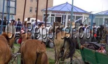 На самом большом лошадином рынке в Мукачеве