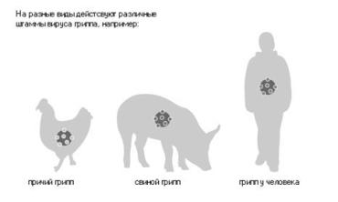 Генетическая природа вируса H1N1