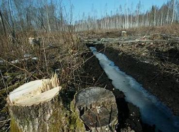 В Берегове приостановлена трелевка древесины из лесосеки