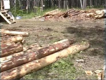 Закарпатские лесники нарушили законы вырубки лесов