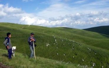 Жители украинских Карпат традиционно разводят овец
