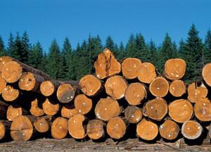Товарна біржа «Закарпатський лісовий ринок» проводить аукціонні торги