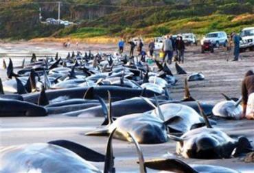 На австралийский остров выбросились дельфины и киты