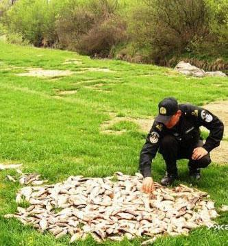 На Закарпатті заборонена весняна рибалка